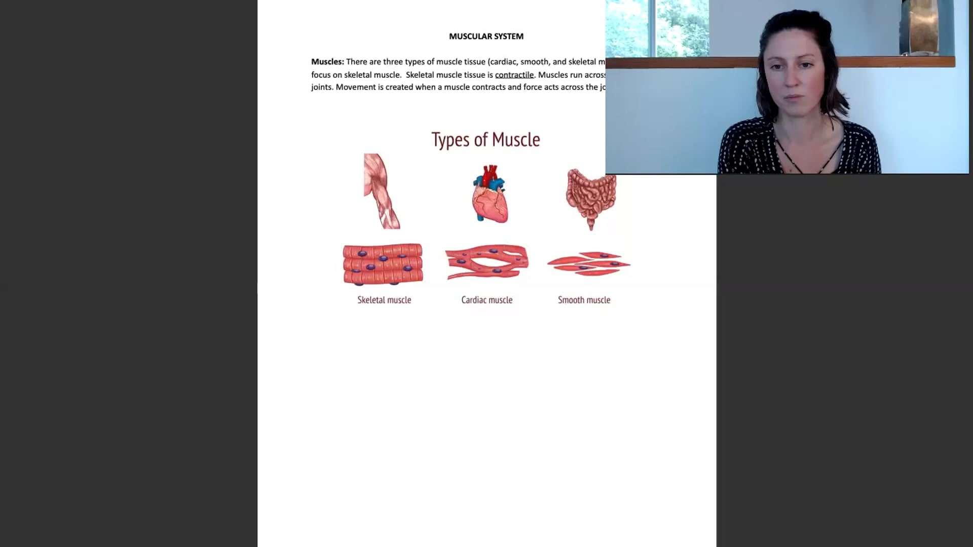 """10 min """"Muscular System"""" Lecture Workshop"""