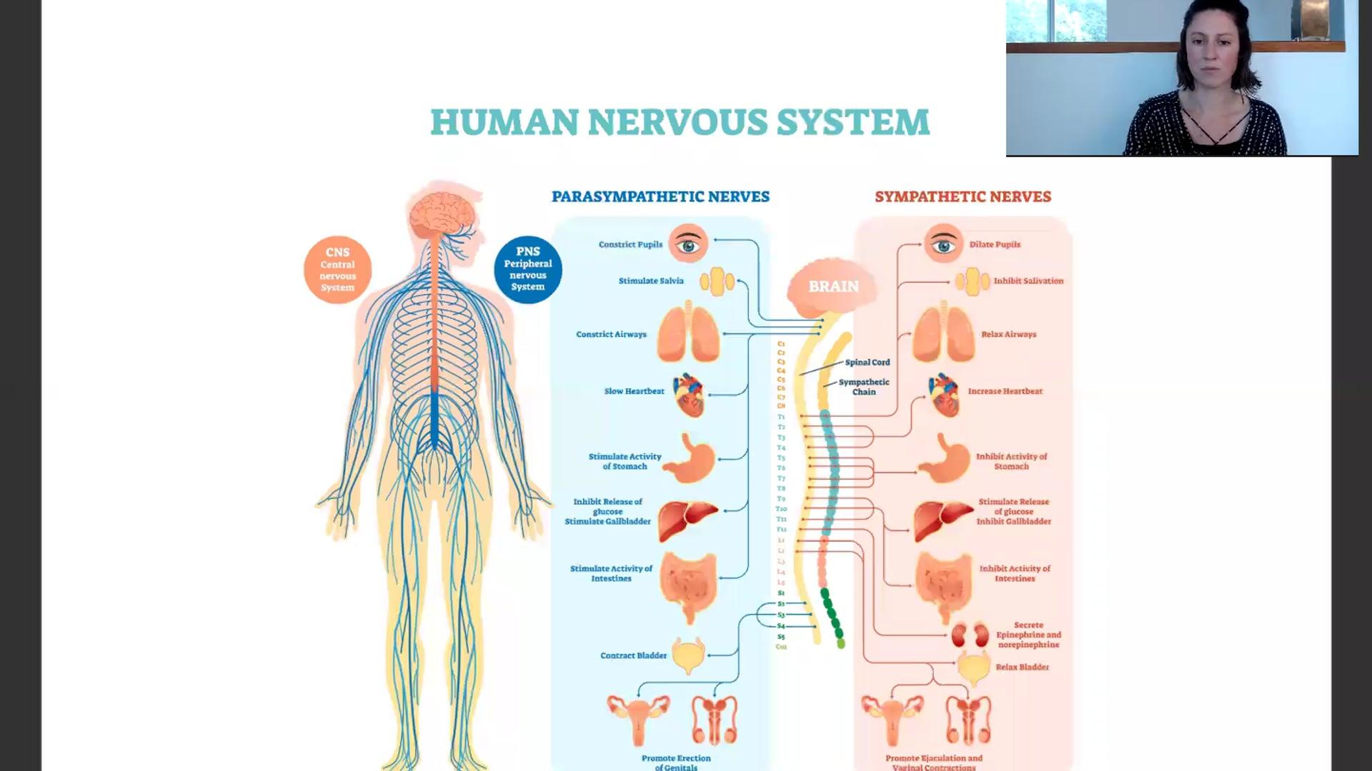 """10 min """"Nervous System"""" Lecture Workshop"""