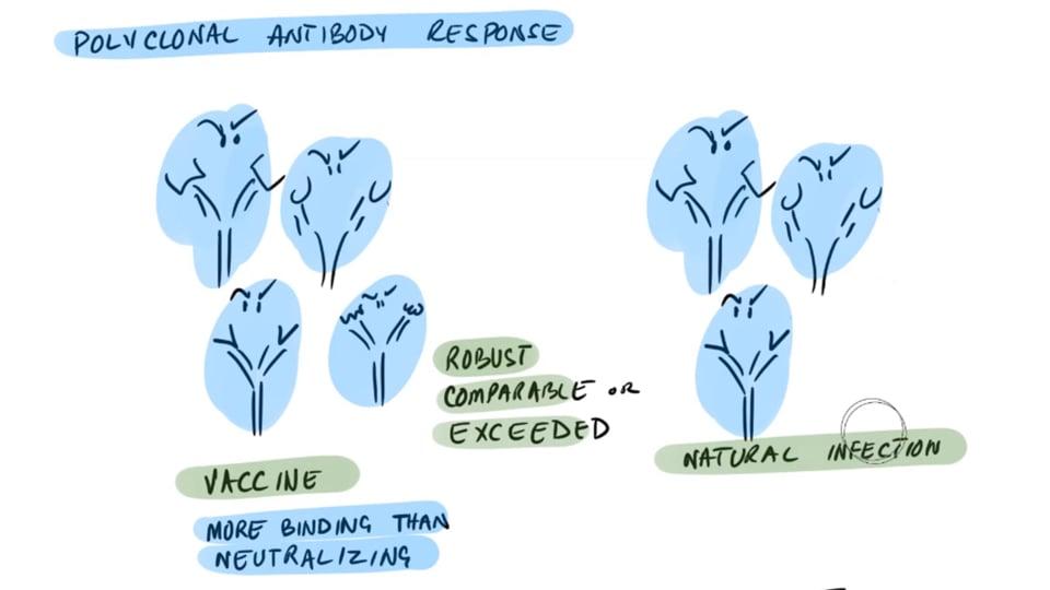 Non-Neutralizing Antibodies From mRNA Vaccines