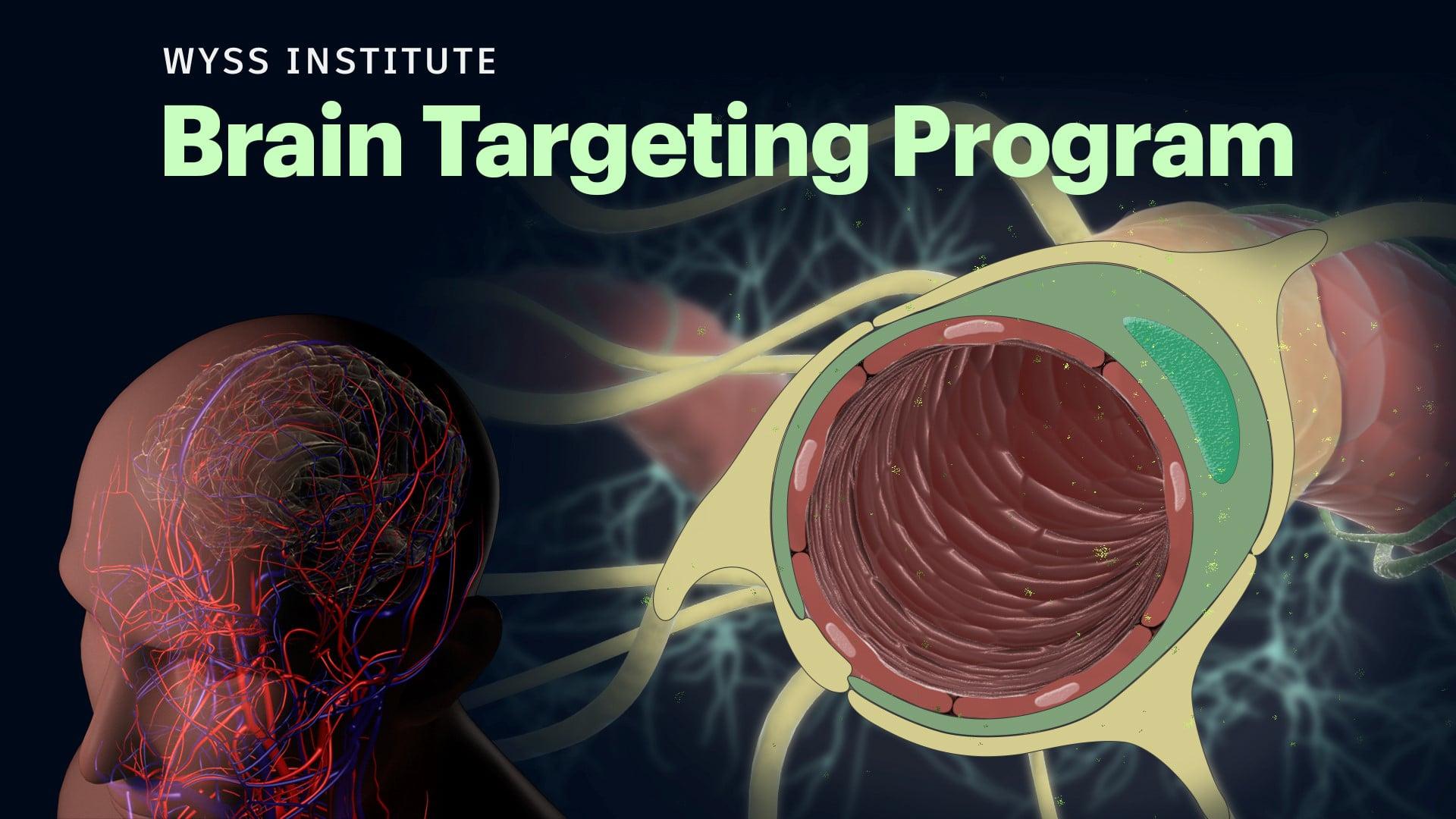 Wyss Institute Brain Targeting Program