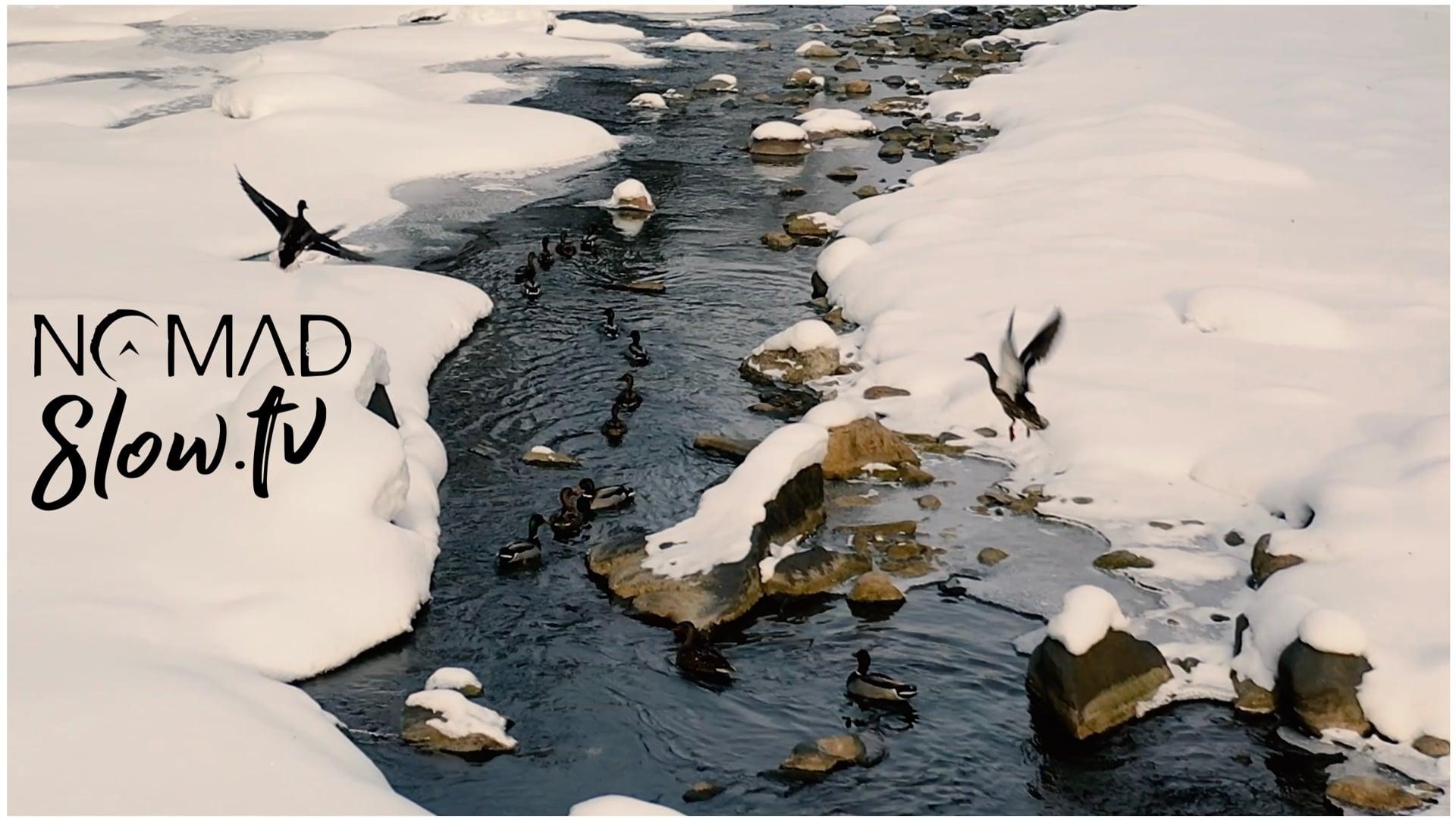 Ducks on Tomifobia - CGI Snake - Chris Zabriskie