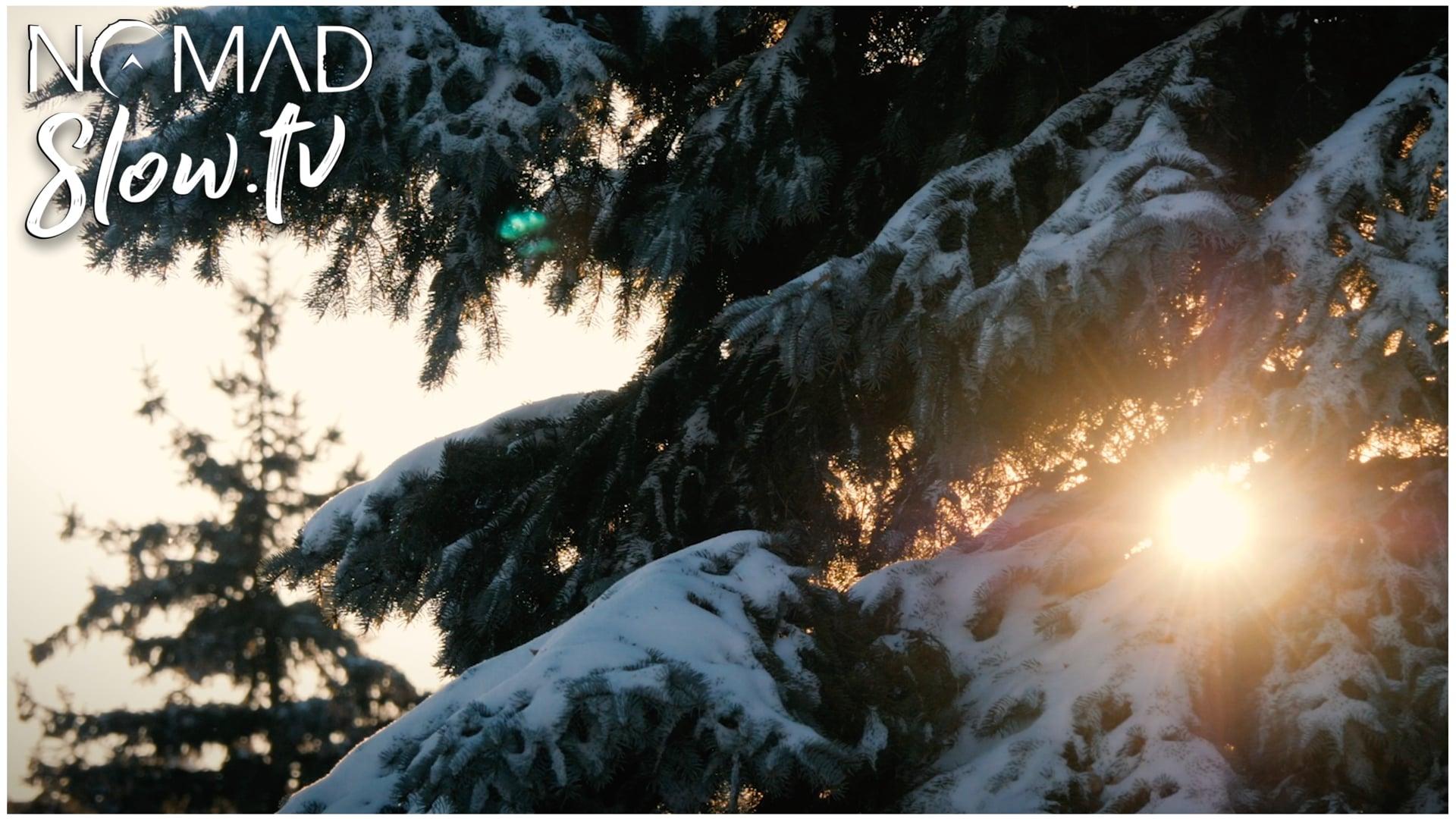 Montreal Winter Trees | Satya Yuga - Jesse Gallagher
