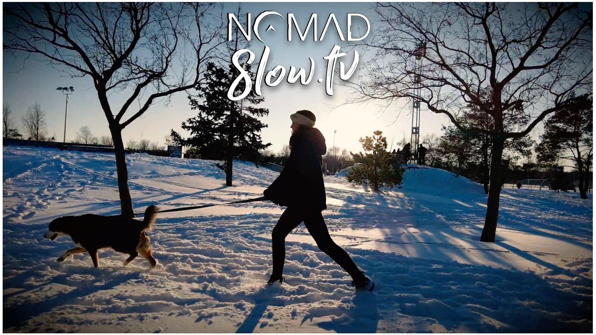 Winter Dog Walk  Tratak - Jesse Gallagher