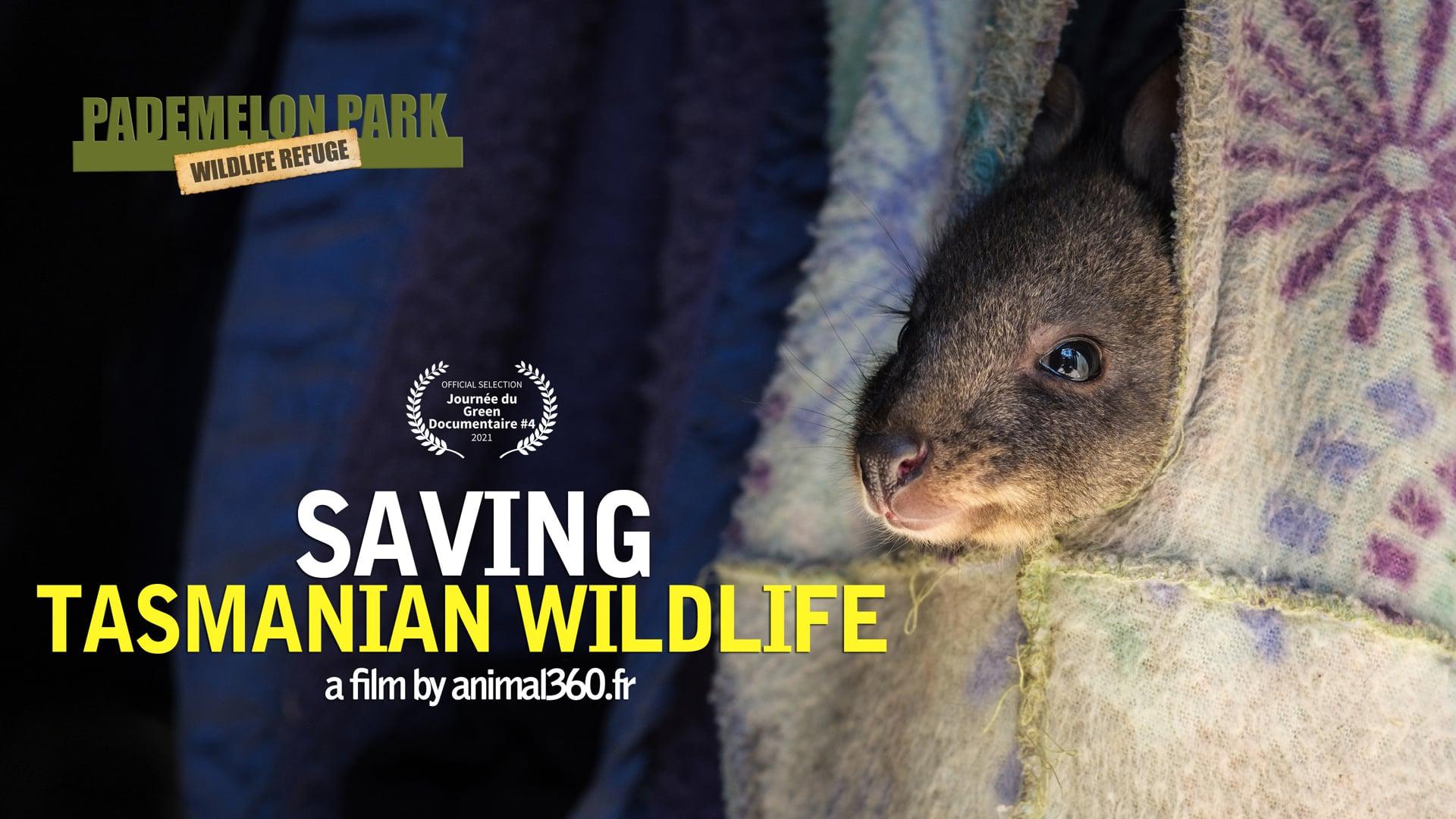 Pademelon Park wildlife refuge : Saving Tasmanian Wildlife