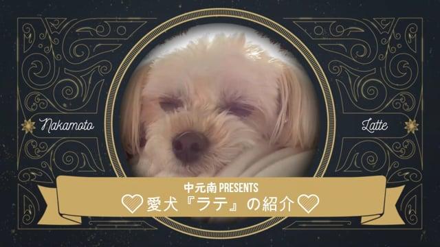 中元南選手 presents 愛犬「ラテ」の紹介