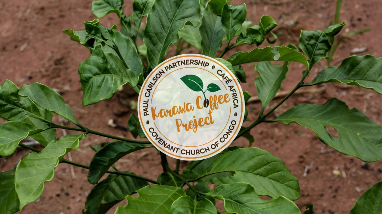 Karawa Coffee Project: From Seed to Cup