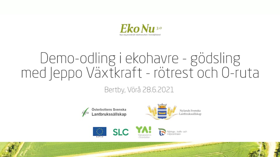 Demo-odling av ekohavre, Jeppo Växtkraft