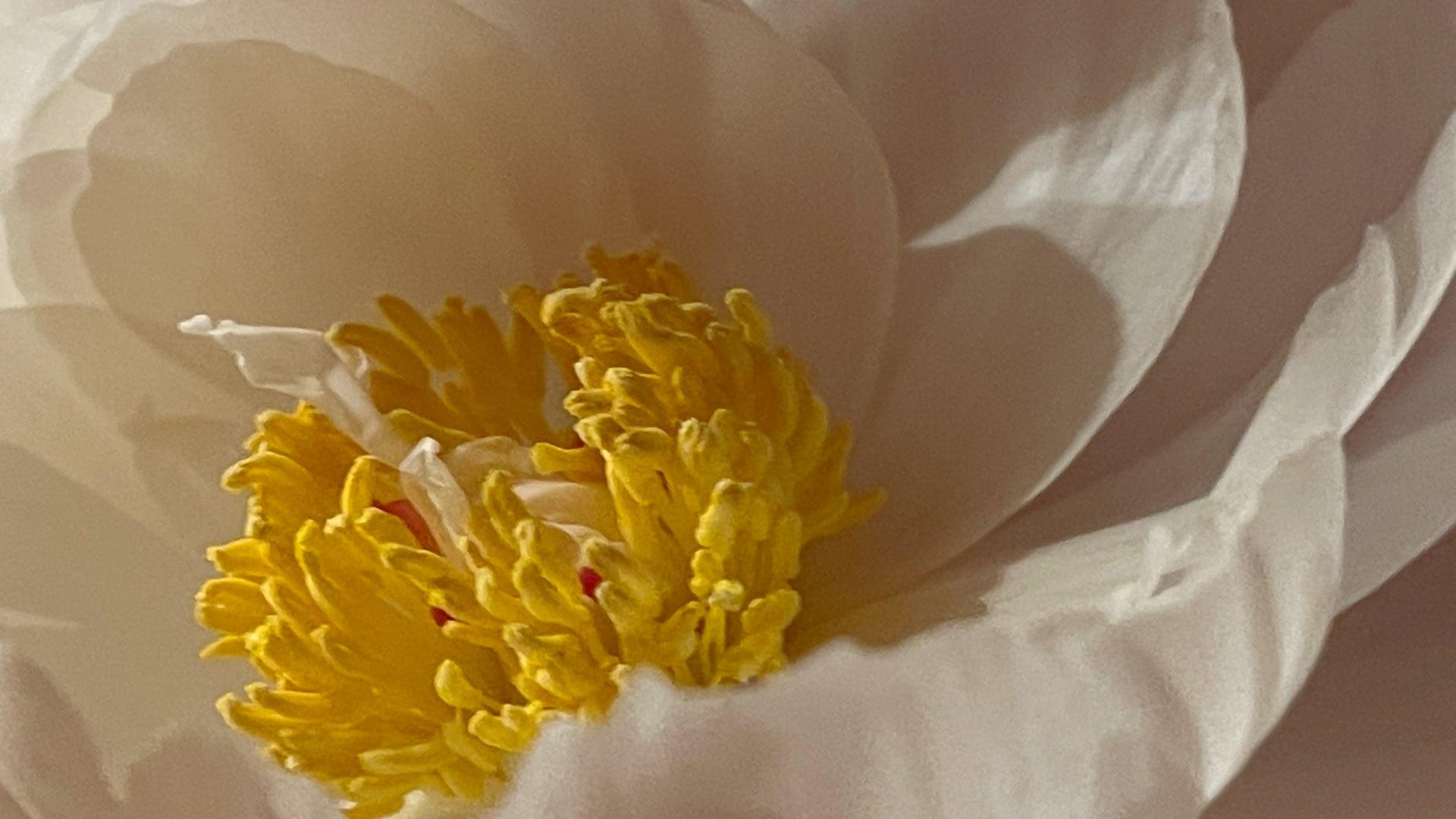 June 21: Cultivating Sukha Internally