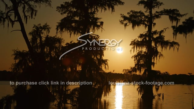 2936 nice sunset as ducks fly thru louisiana swamp