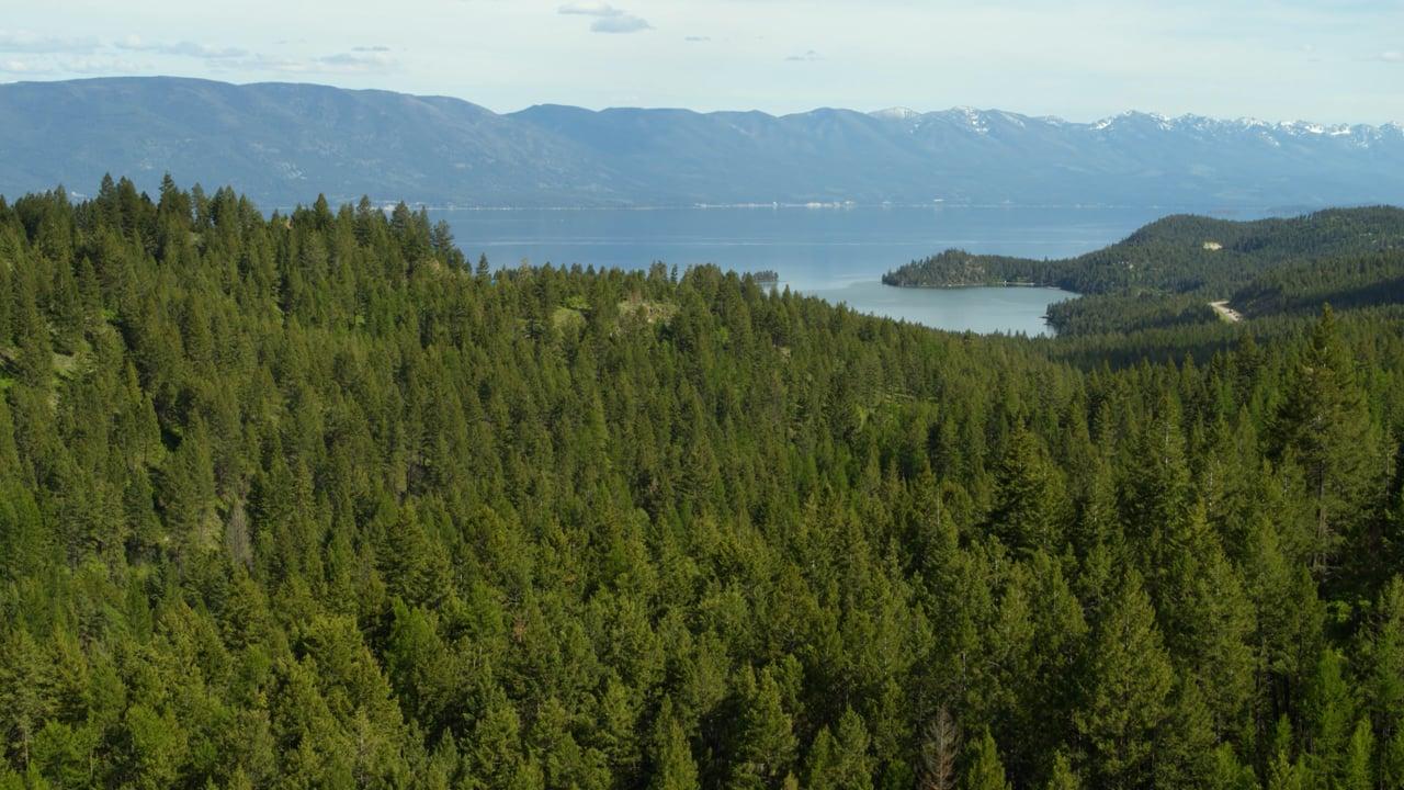 Timber Rock Property