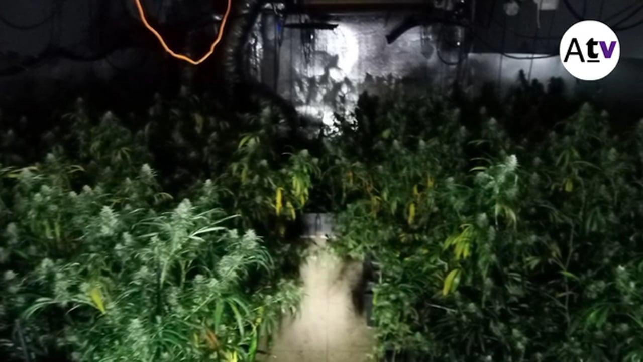 Desmantellada una altra plantació de marihuana a Arenys de Munt, ara al carrer de les Suredes