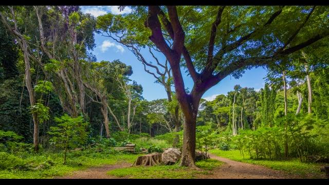 Maui Island, Hawaii. Part 3 -  Nature Relax Video