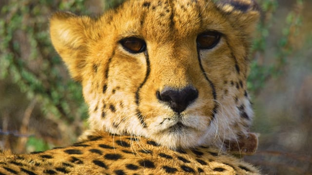 Sanbona Wildlife Reserve - Wildlife Film