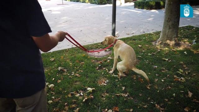 Campaña para concienciación de dueños de mascotas