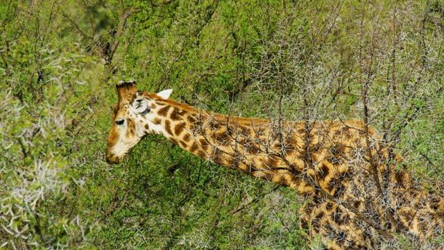 African Wildlife - Sanbona Wildlife Reserve - Film
