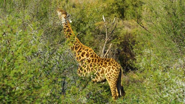 African Nature and Wildlife of Sanbona Wildlife Reserve - Relaxation Video & Sounds of Africa