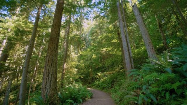 4K Virtual Hike on West Tiger Trail, Issaquah