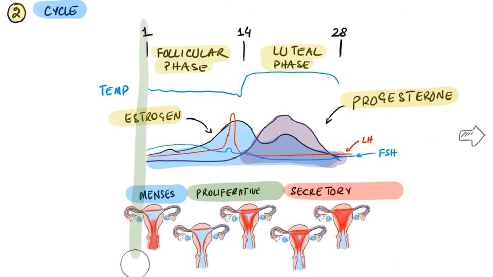 Irregular Periods And Vaccines