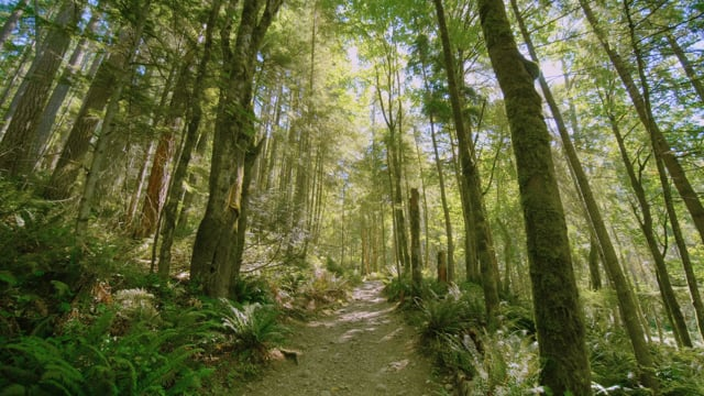 4K West Tiger Trail, Issaquah Area - Short Preview