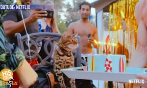 Cat lovers, you got your binge show!