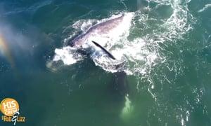 Pawley wanna whale?