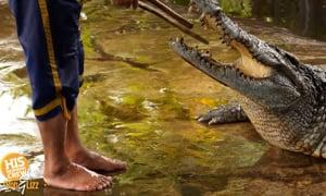 Croc-ifornia