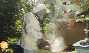Bizarre Bee Boxes