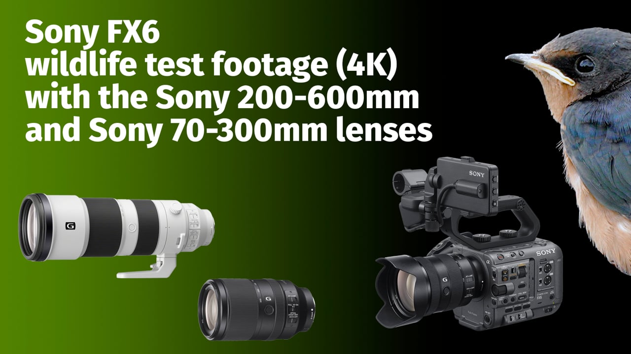 Sony FX6: Wildlife test footage with 200-600mm and 70-300mm lenses (4K)