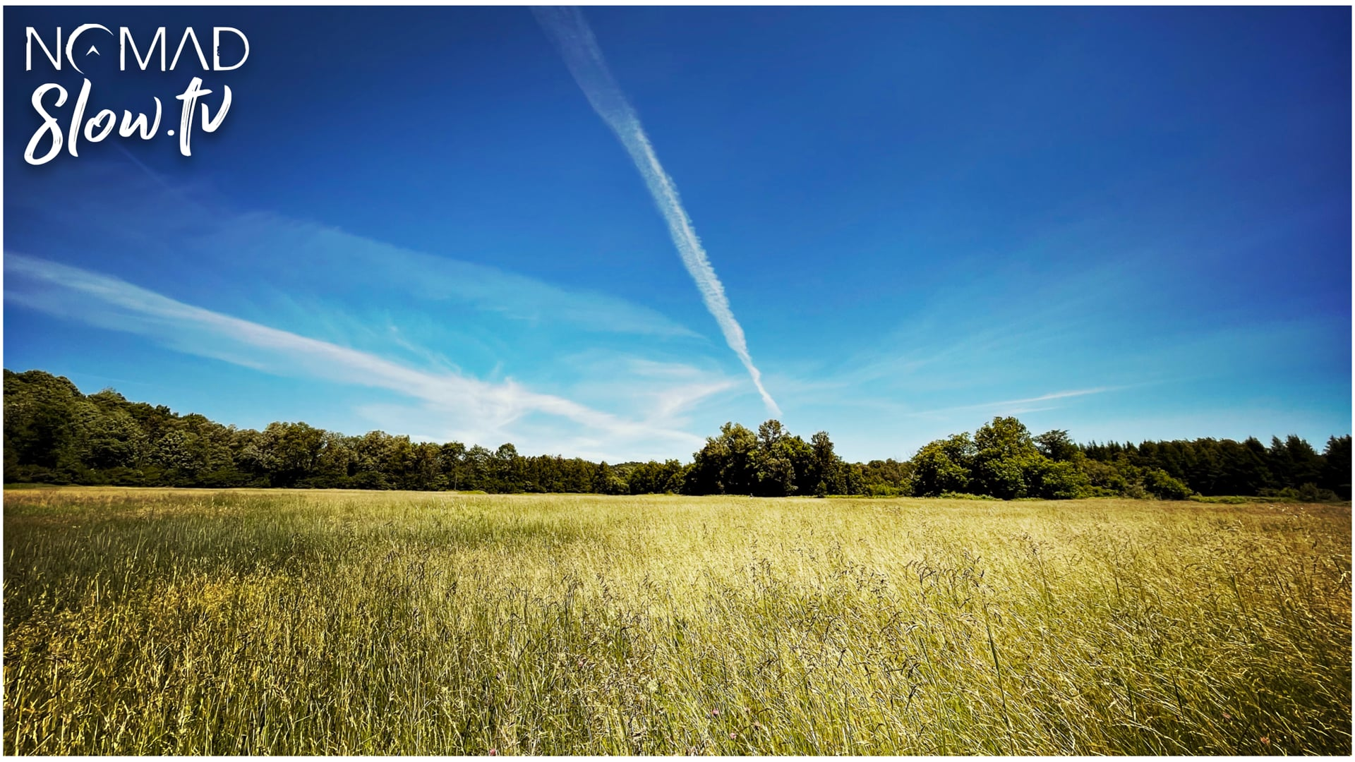 Slow Field Summer Day
