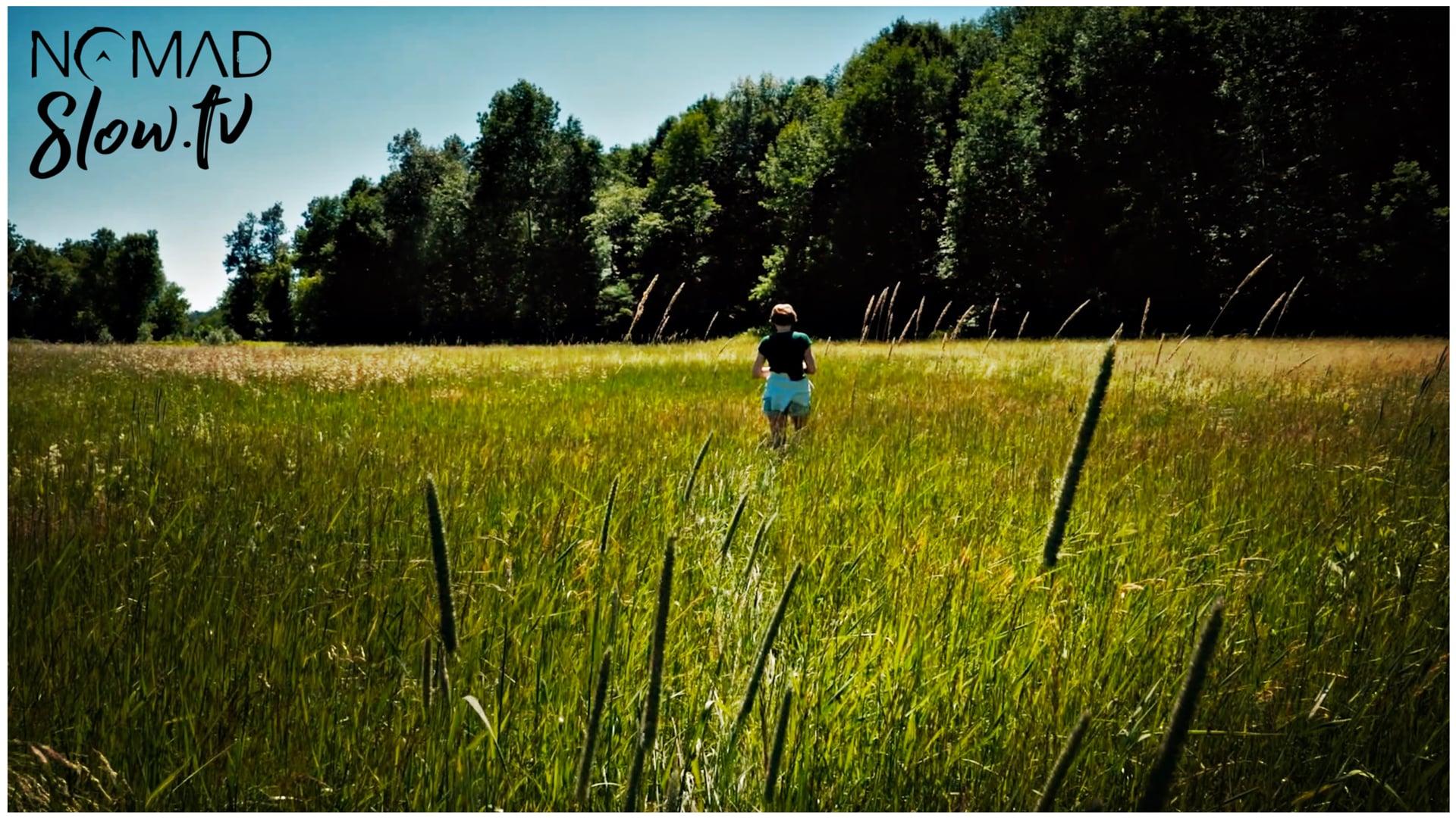 Windy Summer Field