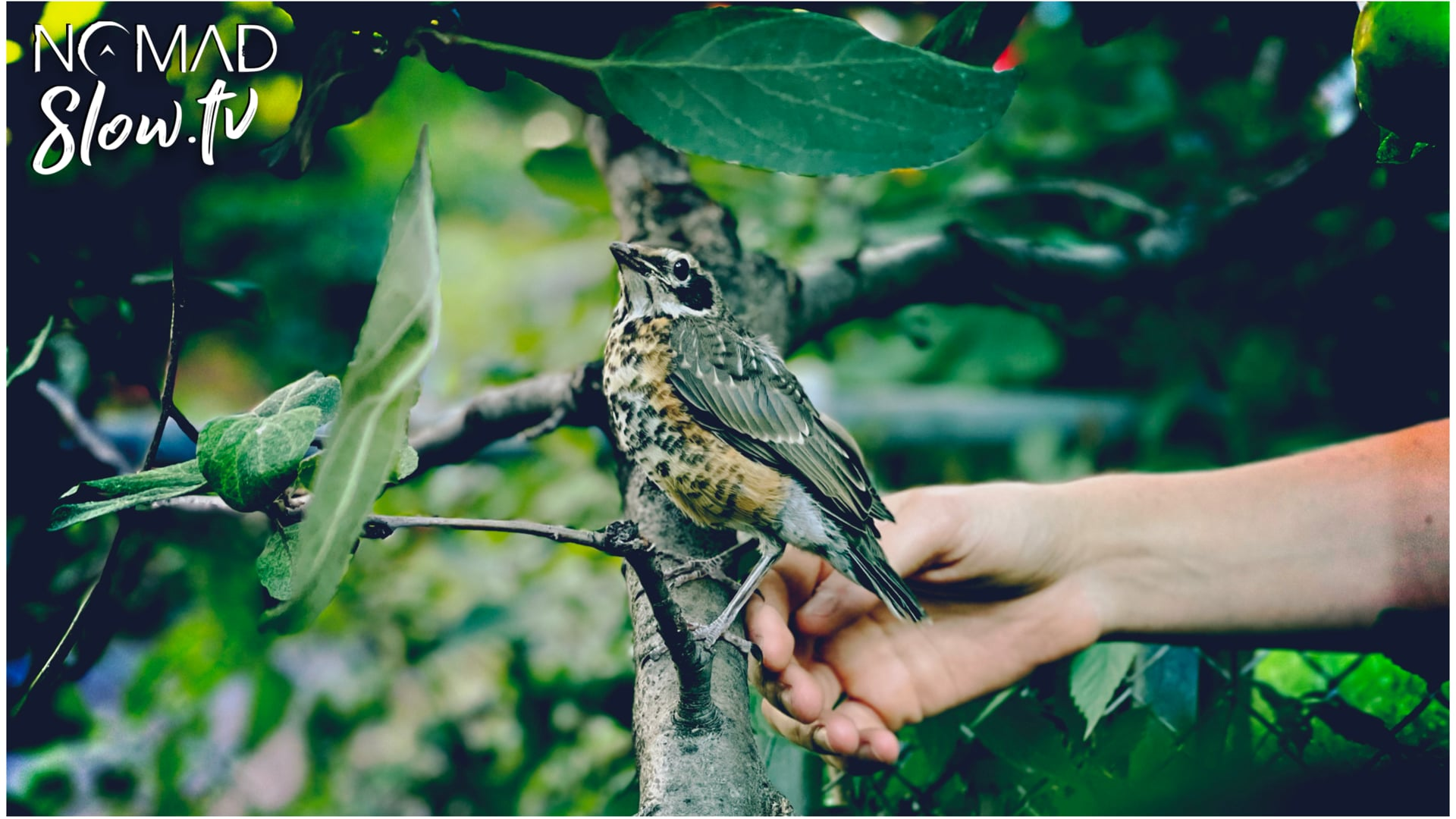 House Bird