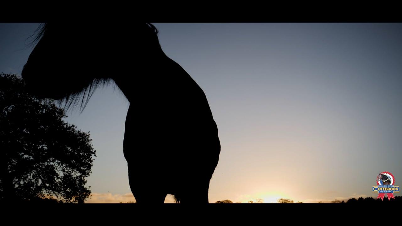 Cotebrook Shire Horse Centre- A New Day