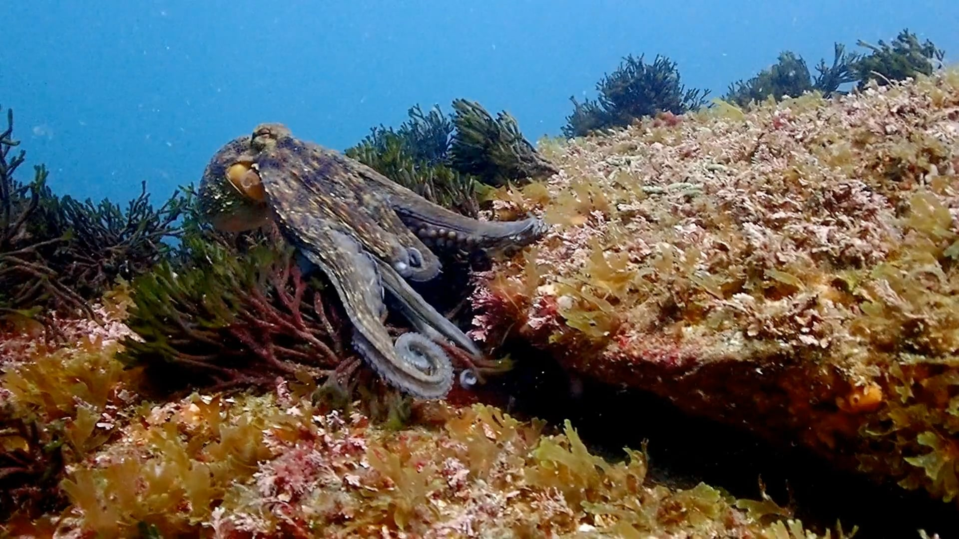 Rutas Interpretativas Submarinas