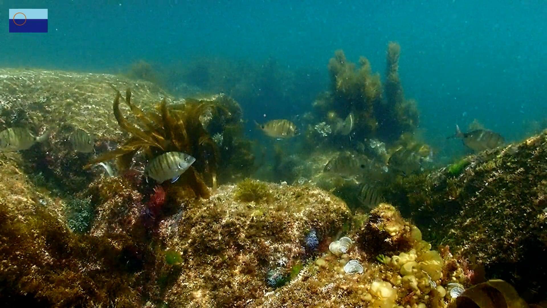 Un paseo bajo el mar / Un paseo baixo o mar - Parque Nacional das Illas Atlánticas de Galicia