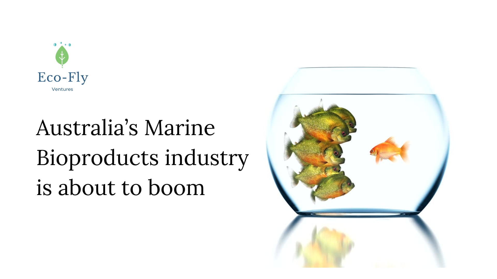 The Australian marine bioproducts industry is about to boom