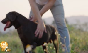 Aaron's relationship with his dog, melted our hearts!