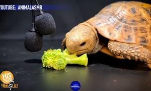 Turtle-tonin???