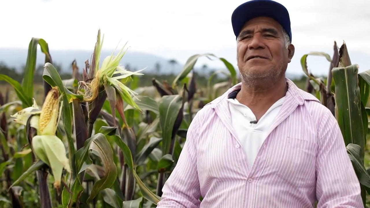 Maíz Arrocillo Legado Ancestral y Callejones de Xalapa