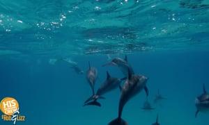 Dolphin saviors!
