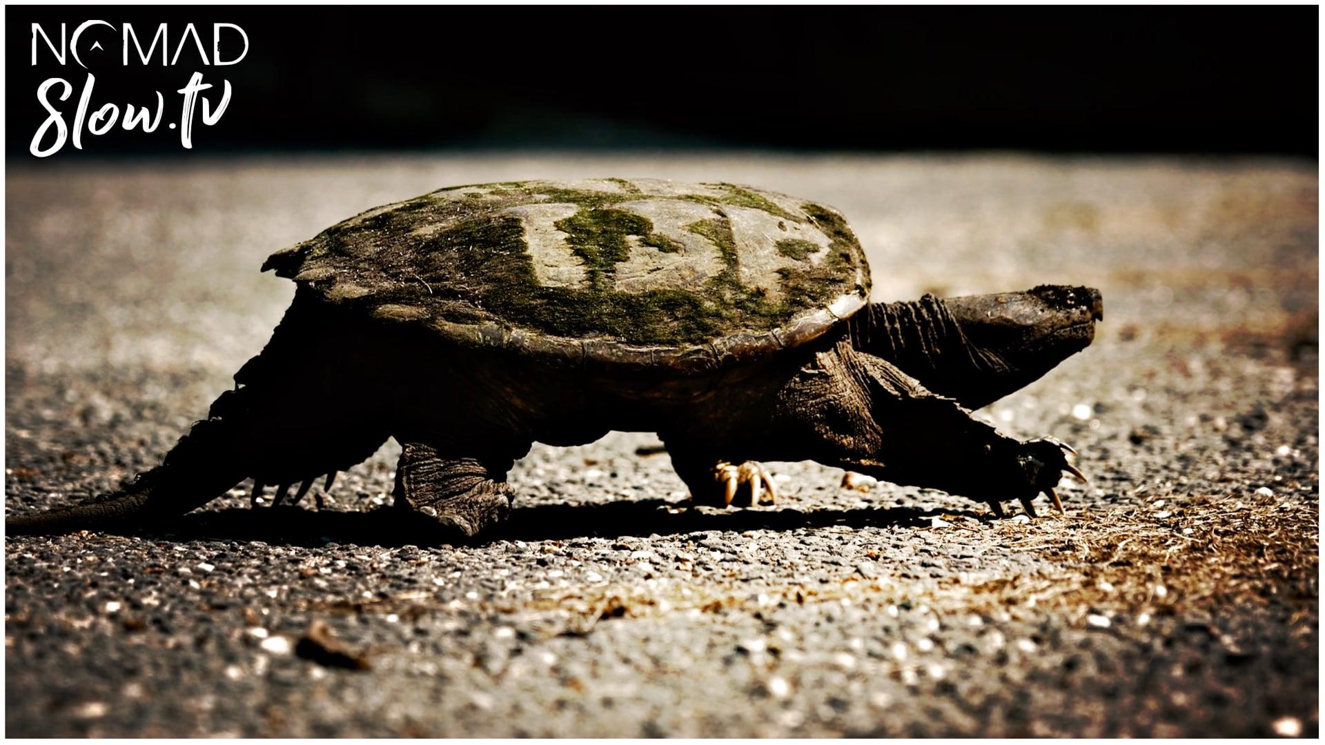 Turtle - Cylinder Seven - Chris Zabriskie