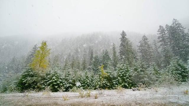 Relaxing Wintertime. Falling Snow