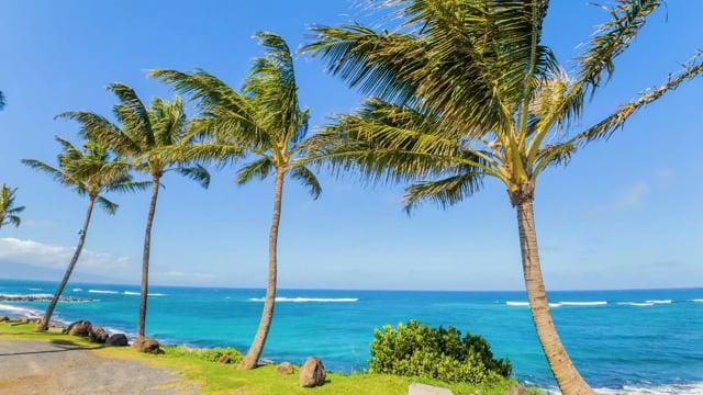 Tropical Palms Maui island, Hawaii - Nature Relax Video