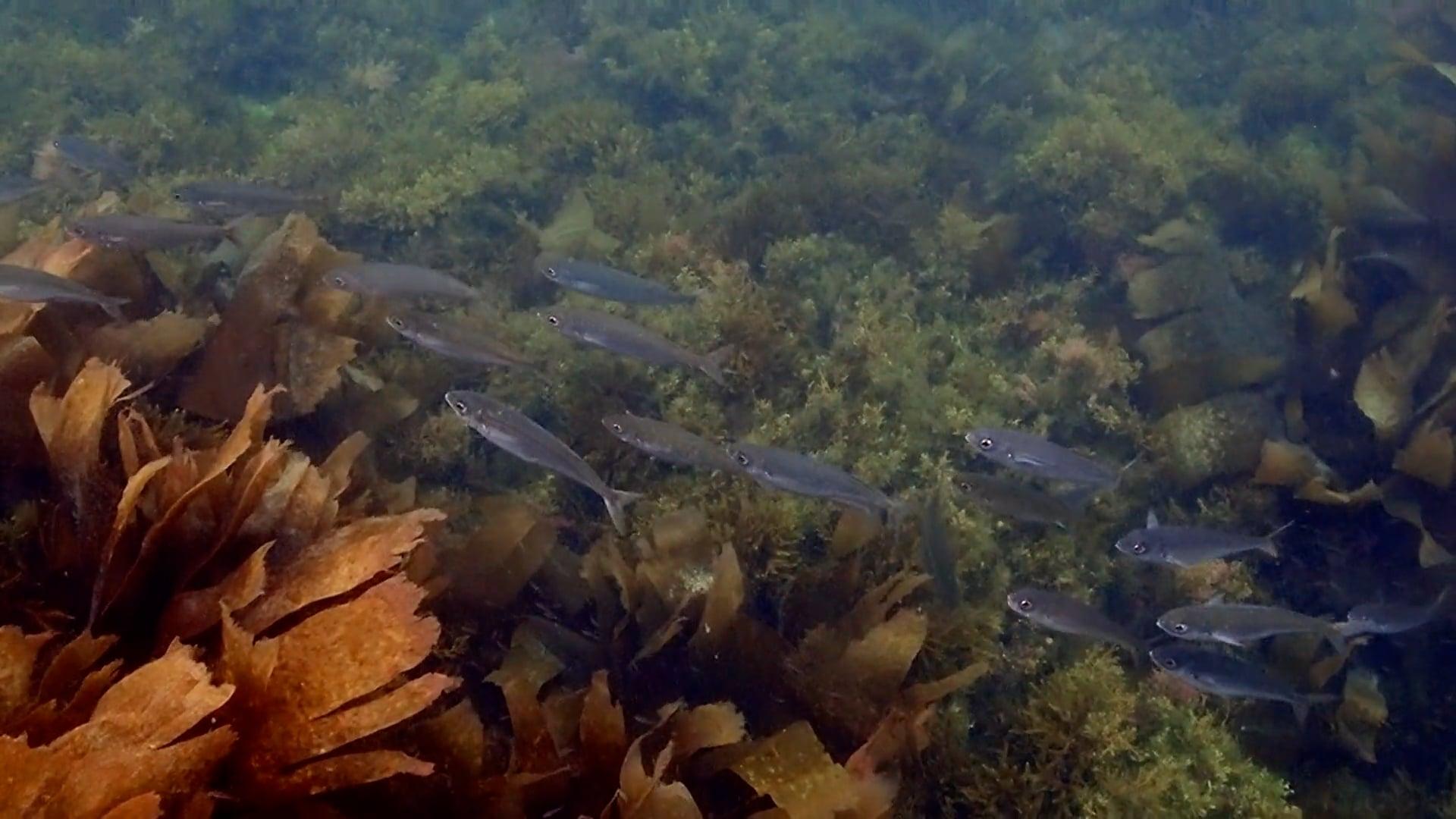 ONS: Un paseo baixo o mar / Un paseo bajo el mar
