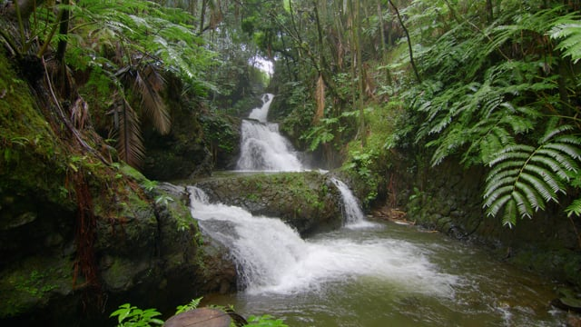 Tropical Island Stream. Part 2 - Nature Relax Video