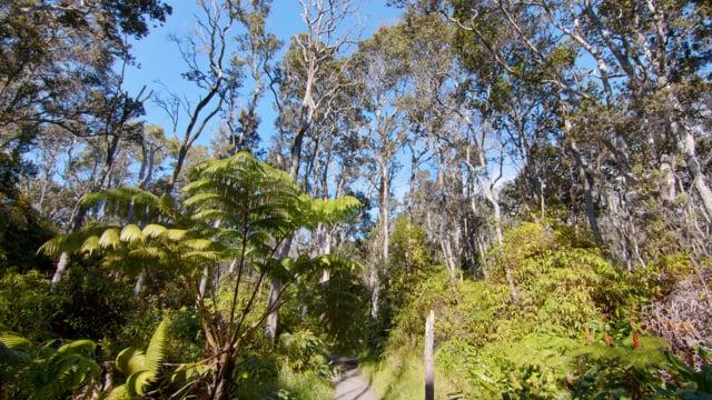 Bird Songs of Tropical Forest. Kilauea Iki Trail, Big Island, Hawaii