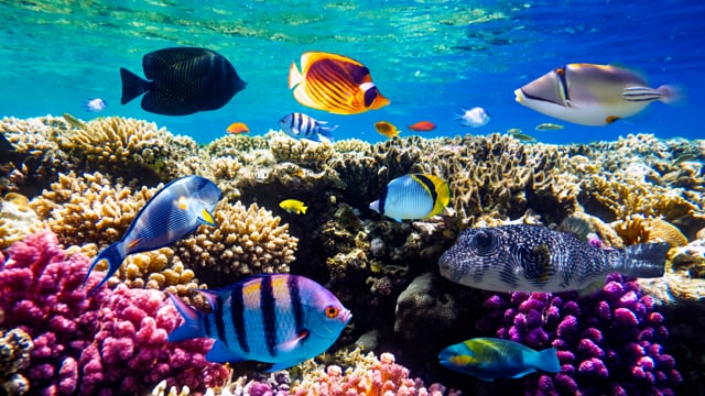 4K Red Sea Diving, Egypt