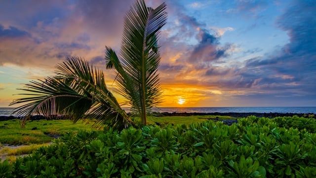 Tropical Palm Trees at Sunset - Nature Relax Video