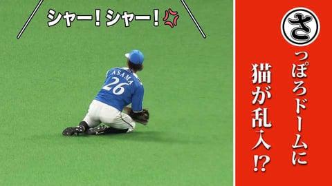 札幌ドームに猫が乱入!?…本日のまとめるほどではないまとめ