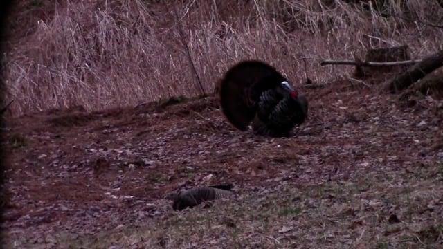 Dave Laskey's Turkey Hunt