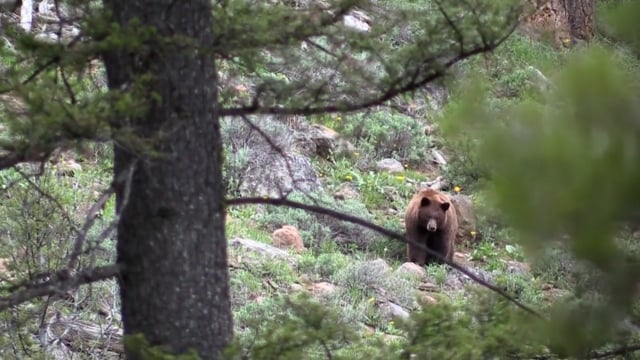 Bear Hunting in Idaho with with Little Lost Outfitters/Jeremy Ballantine